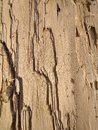 Resin. pillar old wood texture Royalty Free Stock Photo
