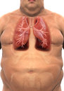 Respiratory system of overweight body d render Royalty Free Stock Images