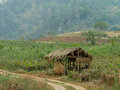 Rest hut in thailand farm made of bamboo giving shade for workers the sun from the heat of thai national park tak Royalty Free Stock Photos