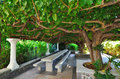 Rest sitting area under the mulberry tree morus Royalty Free Stock Images