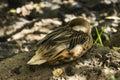A resting bird in the shade at santa cruz galapagos ecuador Stock Images
