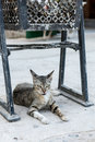 Resting cat. Royalty Free Stock Photo