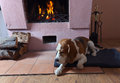 Resting dog near to a fireplace Royalty Free Stock Photo