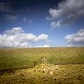 Resting Sheep Royalty Free Stock Photo