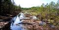 Restoration of bog ecosystem Royalty Free Stock Photo