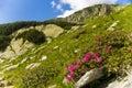 Retezat National Park Royalty Free Stock Photo