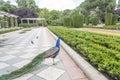 Retiro Park in Madrid Royalty Free Stock Photo