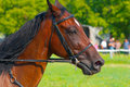 Retrato del caballo marrón hermoso del perfil Foto de archivo libre de regalías