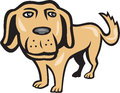 Retriever dog big head isolated cartoon illustration of a golden with looking towards viewer done in style on background Stock Photos