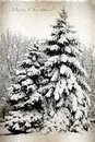 Retro card with merry christmas trees and fir trees covered in snow a park winter landscape Royalty Free Stock Images