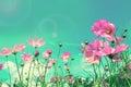 Retro cosmos flower fields background Royalty Free Stock Photo