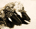 Retro ewe in antique coloring on cream background Royalty Free Stock Photo