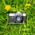 Retro film camera and yellow flowers on a green lawn Royalty Free Stock Photo
