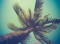 Retro Filtered Single Palm Tree Royalty Free Stock Photo