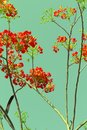 Retro flame tree royal poinciana or tropical red flower in summer in color style Royalty Free Stock Photos