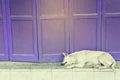 Retro folding purple door