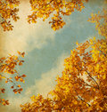 Retro image of Autumn leaves Royalty Free Stock Photo