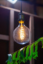 Incandescent lamps with tree in background. Edison lamp. Royalty Free Stock Photo