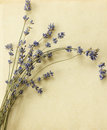 Retro lavender postcard vintage recycled paper with small bunch Royalty Free Stock Photo