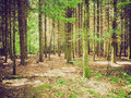 Retro Look Forest Of Trees