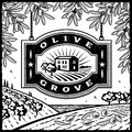 Retro Olive Grove black and white Royalty Free Stock Photography