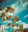 Retro Palm Trees In The Wind Royalty Free Stock Photo