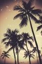 Retro Sepia Palm Trees Royalty Free Stock Photo