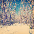 Retro Snow Trees