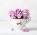 Retro still life with small  pale pink bouquet of Lilac  against  background of  a white  wall Royalty Free Stock Photo