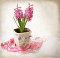 Retro style stylized composition with hyacinth st valentine s day congratulations pink in Stock Photo