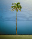Retro Style Tall Single Palm Tree Royalty Free Stock Photo