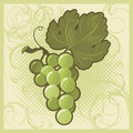 Retro-styled green grape bunch Royalty Free Stock Photos