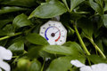 Retro thermometer close up of a spring in foliage concepts of climate specifics outdoor shot with blurred background and Stock Photography