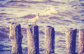 Retro vintage photo of seagull on wooden posts Stock Image