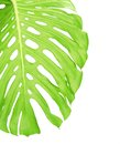 Reverse side of tropical leaf close up with water drops isolated on white Stock Photography