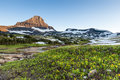 Reynolds mountain over wildflower field at logan pass glacier n national park Stock Image