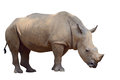 Rhino brown isolated on white Royalty Free Stock Photo