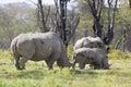 Rhino Family in Kenya Royalty Free Stock Photo