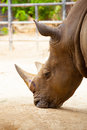Rhino head closeup in farm Royalty Free Stock Image