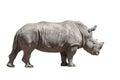Rhino isolated on white walking background Stock Photo