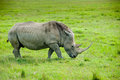 A rhino, Kenya Royalty Free Stock Photography