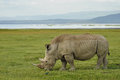 Rhino a at lake nakuru africa Royalty Free Stock Photography
