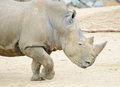 Rhino running Royalty Free Stock Photo