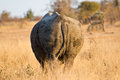 Rhino standing in the bush Stock Photo