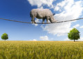 Rhino walking on rope great white steel cable blue sky trees and wheat field background Stock Photos