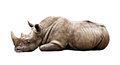 Rhino on white background huge isolated Stock Image