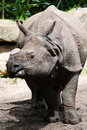 Rhino in zoo Royalty Free Stock Photography