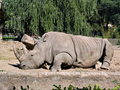Rhino in zoo 2 Royalty Free Stock Photo