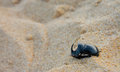 Rhinoceros beetles on the sand a beetle diggind itselfs tarifa beach spain Stock Photo