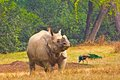 Rhinoceros indian one horned in new delhi zoo Stock Images